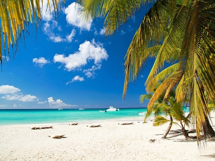 plaja salbatica nisip palmier cocos coronavirus